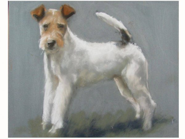 A Wire Fox Terrier Portrait