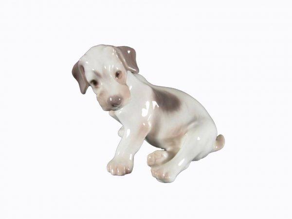 Cucciolo di Fox Terrier