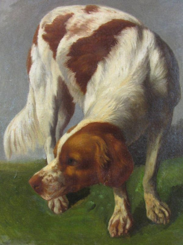 Breton Epagneul Dog Portrait