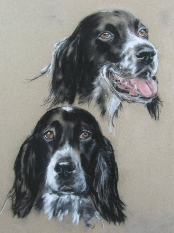 A Pair of English Setter Dogs Portraits