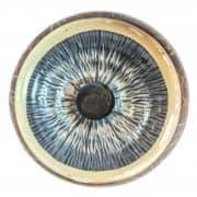 Modello Anatomico di un Occhio 6