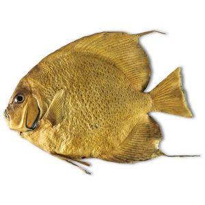 Modello di Pesce Tropicale A183