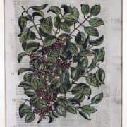 A. Jacobs, Stemma della Famiglia Salmouth, 1766-69 b