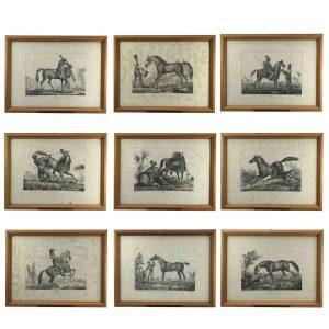 luigi-giarré-razze-di-cavalli-1822