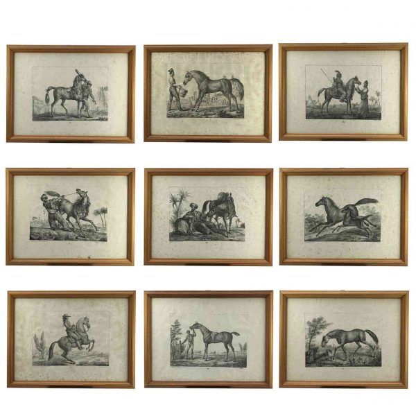 European Horse Breeds Nine Lithographs by Italian Giarrè Luigi 1822 Firenze