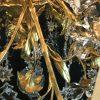 lampadario-antico-dorato-francese-con-cristalli-l